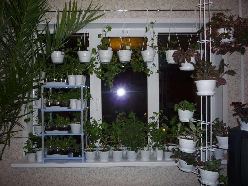 подоконник с растениями