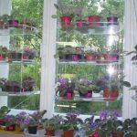 Цветы на подоконнике на подвесных полках