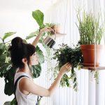 Подвесная полочка для комнатных растений