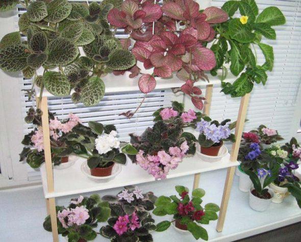 Простой стеллаж для растений
