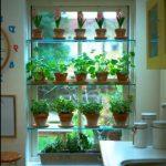 Размещаем много комнатных растений на одном окне