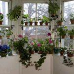 Шикарный цветущий сад на подоконнике