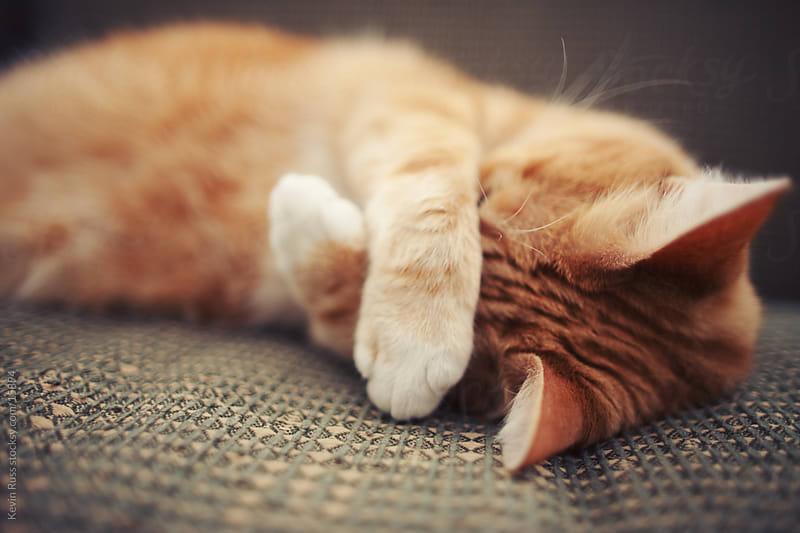 как вывести пятно от мочи кота с ковра