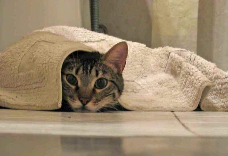 как избавиться от запаха кошачьей мочи на ковре в доме