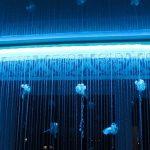 подсветка штор светодиодной лентой фото дизайна