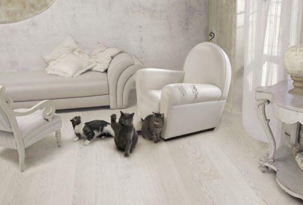белая мебель и домашние животные