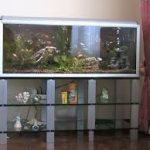 стеклянная тумба под аквариум