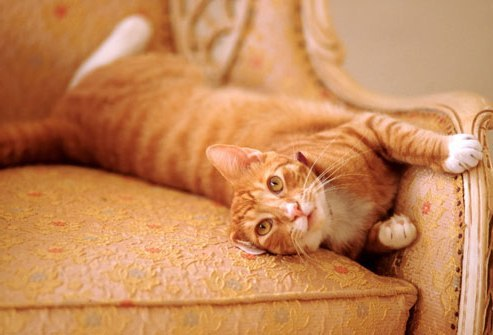 запах мочи кота на диване