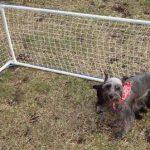 Вольер для собаки из подручных материалов