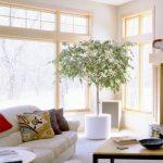 Углы по фен-шуй в гостиной лучше не оставлять пустыми, в них можно разместить растения
