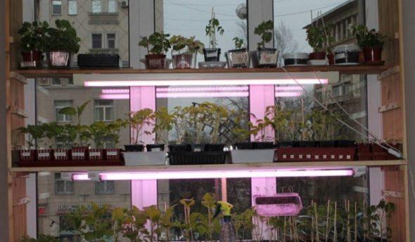 Полочки для растений и рассады