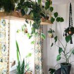Располагаем комнатные растения на полках и подвесках