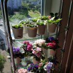 Стеклянный стеллаж для цветов