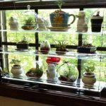 Стеклянный стеллаж с бортиками для кактусов