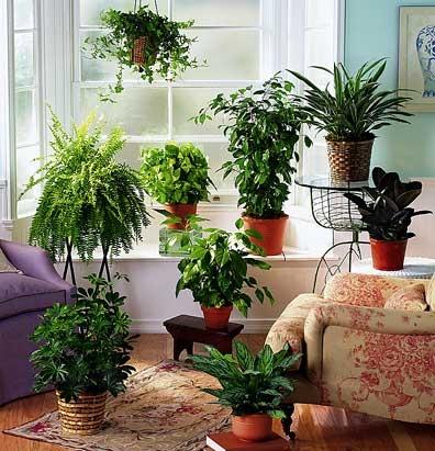 Живые цветы в доме