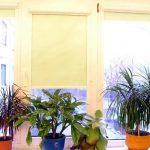 Комнатные растения на пластиковом подоконнике