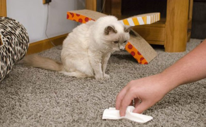 избавиться от запаха кошачьей мочи на ковре