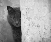 Как отбелить тюлевые шторы фото