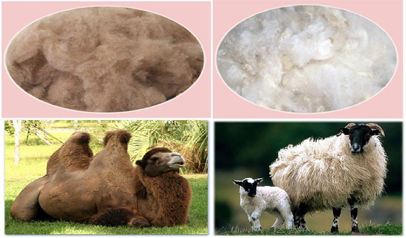 наполнители верблюжья и овечья шерсть