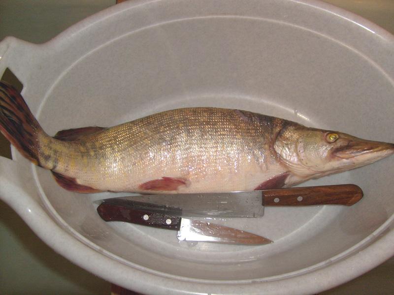 рыба в тазике