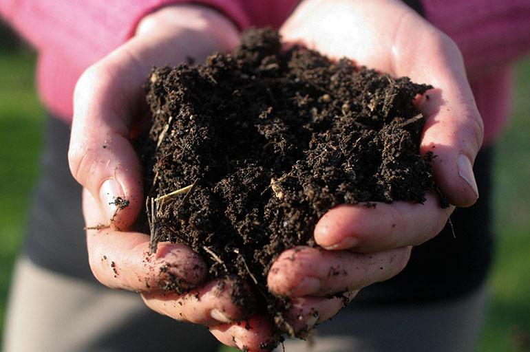 Почва для драцены