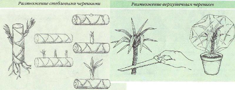 Виды размножения растения